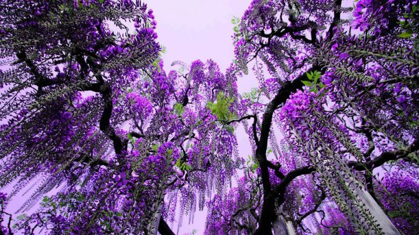 233758042-flower-tree-wallpapers
